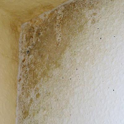 schimmel im wohnzimmer entfernen lassen vom fachmann